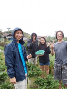 SP-Strawberries-picking-in-the-rain-768x1024
